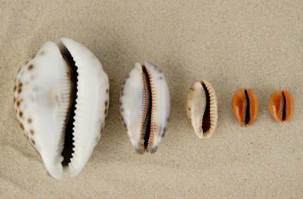IStock_seashell