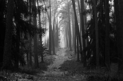 IStock_wilderness_XSmall